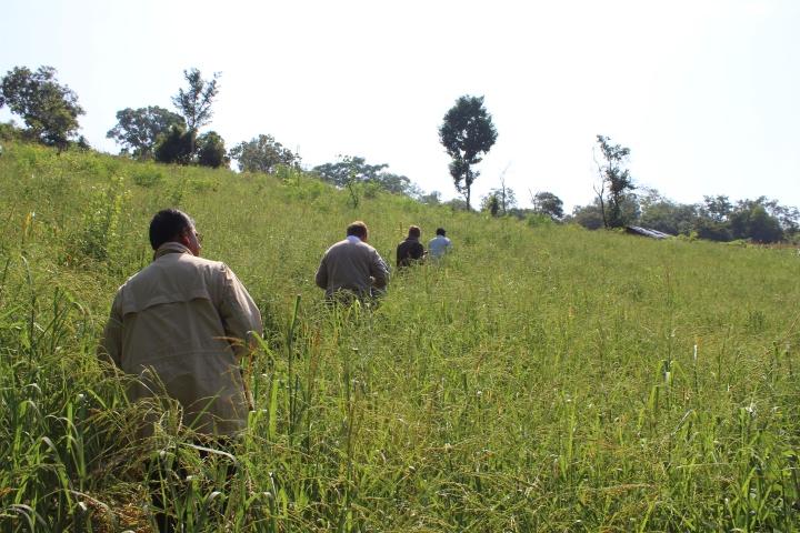 Millet fields