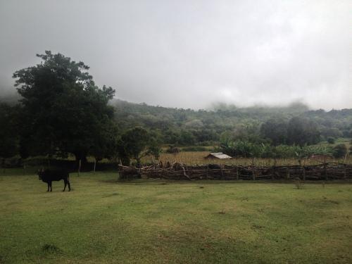 Ittarai, en by med elefantproblem.