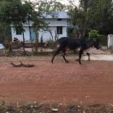 Utanför huset i Pastapur