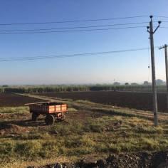 Ett av fälten i Pastapur