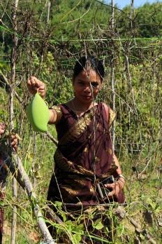 Saranya visar upp en ekologisk mango som växer på en av de kollektiva gårdarna