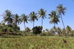 Blå himmel, palmer och blommor