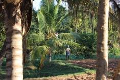 hennes man och son hämtade ner några kokosnötter till oss besökare
