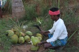 kanske de godaste kokosnötterna jag druckit!