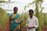 Suwarno och hennes partner Gopal på deras ekologiska fält.